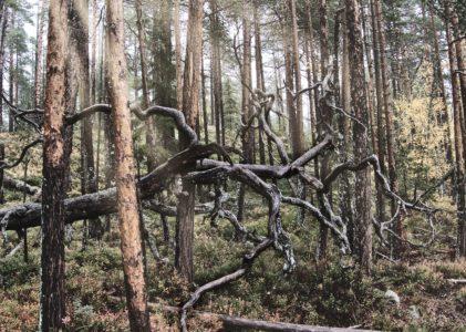 Wenn Bäume Bäume bleiben*