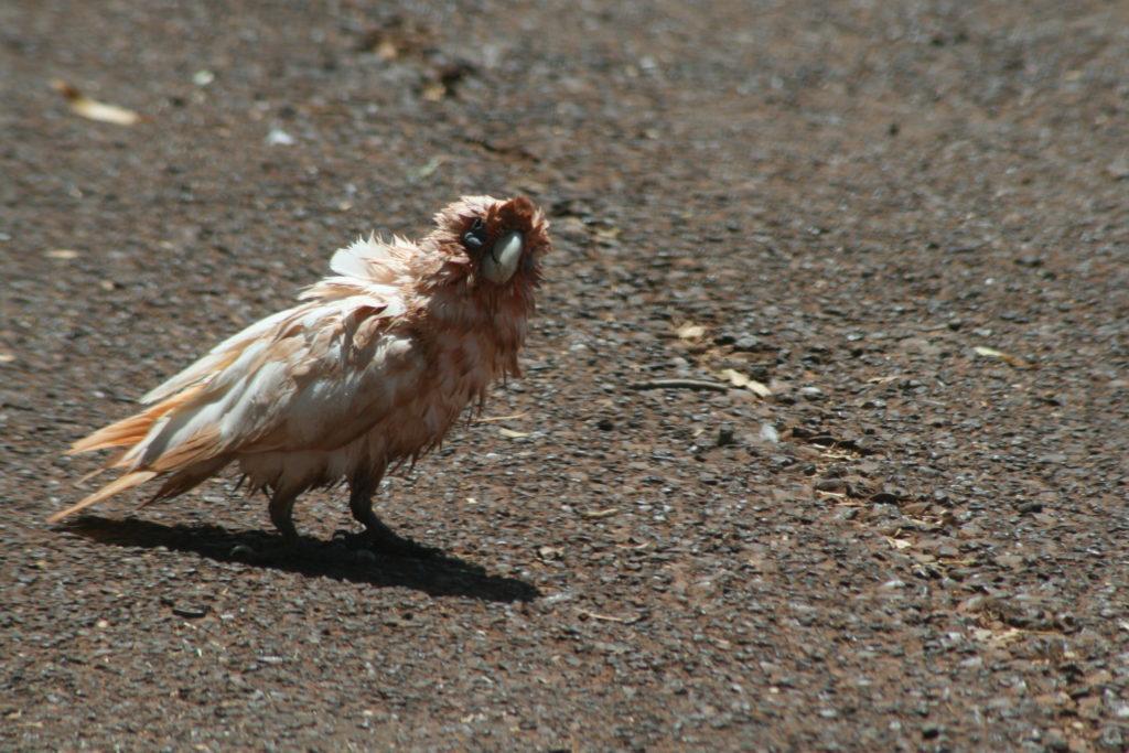 little wet bird